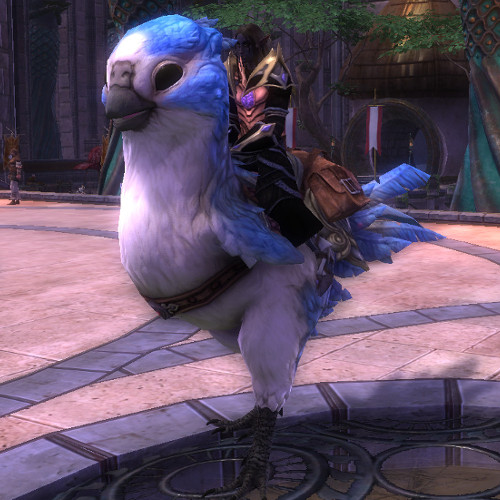 Promo Week: Budgie Madness – Guide