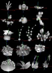 Datamine 3.0 Flowers