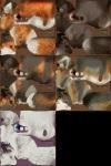 Datamine Fox Pets Skins
