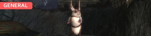 Squirrel Feature Image